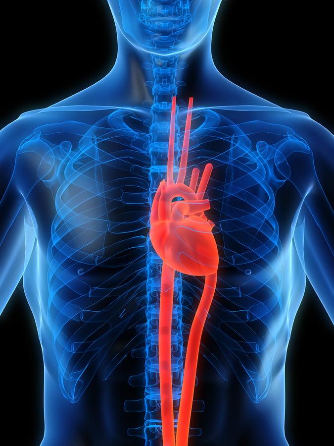 cardiology billing